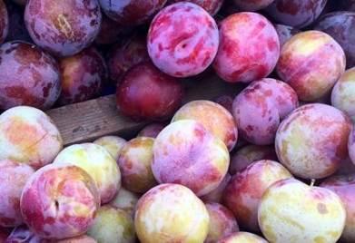 wheres-the-fruit
